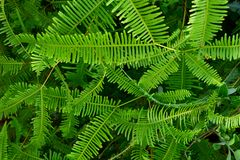 Fern Pattern Royaltyfria Bilder
