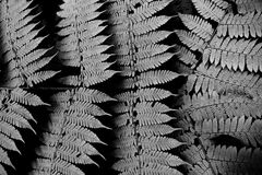 Fern Pattern Stockbild