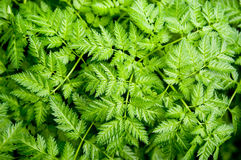 Fern pattern Stock Photos