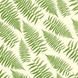 Fern Pattern Background. Seamless, repeating fern pattern background Stock Image
