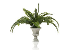 Fern Plant. A fern plant in a stone vase over a white background Royalty Free Stock Image