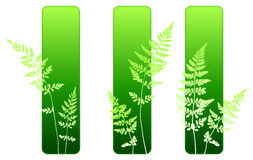 Fern plant green environmental banners. 