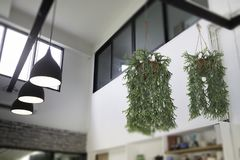 Fern in plant pot hanging on ceiling Stock Photography
