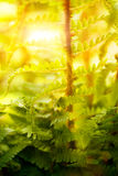 Fern plant Stock Photography