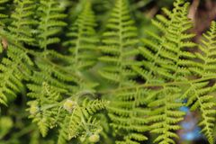 Wild fern plant patterns royalty free stock photography