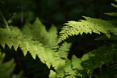 Fern Plants in the Forest stock photos