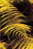 Fern plants in the woods Stock Photos