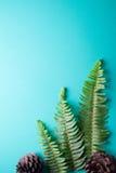 fern pojedynczy liści Obraz Royalty Free