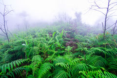 Fern in rain Forest Stock Photos