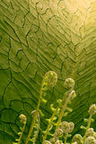 Fern reaching for the light. Fern plants are growing in the direction of the light, that shines from a dried wall corner of soil, becoming green after time stock images