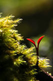 Fern Red Bud Stock Image