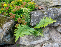 Fern and Rockery Stock Photo