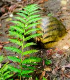 Fern`s shadow on a smooth rock stock photography