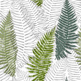 Fern seamless background. Royalty Free Stock Images