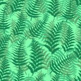 Fern seamless pattern exotic background nature green leaf plant vector illustration. Summer emerald wallpaper tropical botanical textile forest foliage fabric Stock Photos
