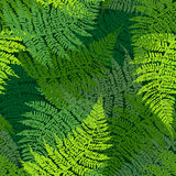 Fern seamless pattern. Ink hand drawn frond illustration Royalty Free Stock Photos