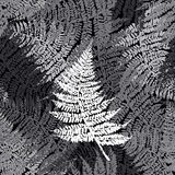 Fern seamless pattern. For textile, wallpaper, wrapping, web backgrounds and other pattern fills Royalty Free Stock Images