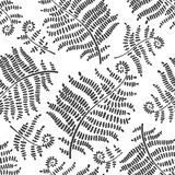 Fern seamless pattern. Vector black & white  illustration. Floral background with branches of fern. Monochrome  pattern Stock Photography