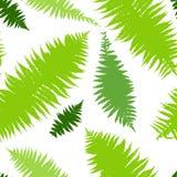 Fern seamless pattern. Vector illustration of Fern seamless pattern Stock Photos