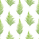 Fern seamless pattern. Stock Photography