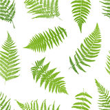 Fern seamless pattern. Stock Image