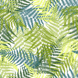 Fern seamless pattern. Vector ilustration of Fern seamless pattern Royalty Free Stock Images