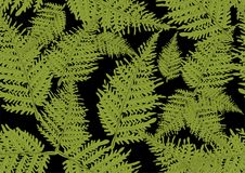 Fern seamless texture. On back background Royalty Free Stock Photos