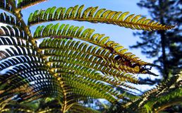 A Fern Seen from Below. In a subtropical forest Stock Photo