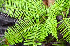 Fern in the Seychelles in the rock Stock Photos