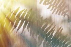 Fern Shadow auf Baumwollvorhang Stockfotos