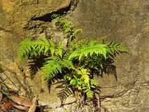Fern and shadows Stock Images