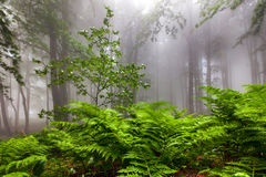 Fern shaked by the wind Stock Photo