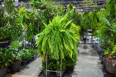 Fern shop. Green Background,fern Planted vertical wall stock photo