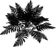 Fern silhouette. Detailed silhouette of a fern plant on a white background Royalty Free Stock Images