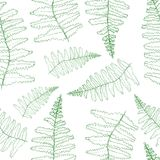 Fern silhouette collection. Green isolated prints of fern leaves on the white. Background Royalty Free Stock Photography