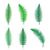 Fern silhouette set of different branches. Vector illustration Royalty Free Stock Photography