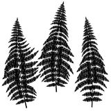 Fern silhouettes on white background. Fern black silhouettes on white background Stock Image