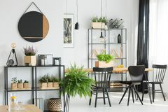 Fern in simple dining room. Fern near shelf in simple dining room with black chairs at table, mirror on wall and wooden accessories royalty free stock photo