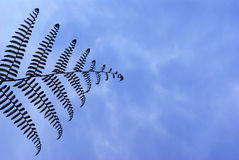 Fern in the Sky Stock Images