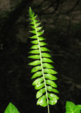 Fern, spider Stock Photography
