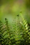 Fern spirals. The fern spirals into a fractal-like structure stock photos