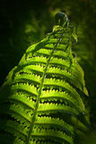 Fern in spring Stock Image