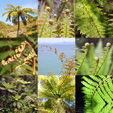 Fern square collage Stock Photos
