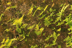 Fern on stone Stock Image