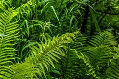 Fern. Summer forest. Stock Photos
