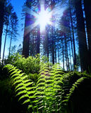 Fern and sunset Royalty Free Stock Image