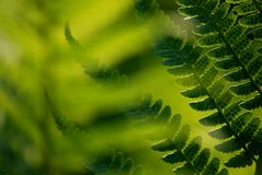 Fern in the sunset Royalty Free Stock Images