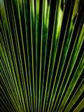 Fern Texture com verde e preto Fotografia de Stock