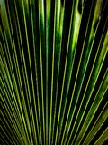 Fern Texture with green and black. Stock Photography