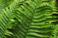 Fern thicket Royalty Free Stock Images